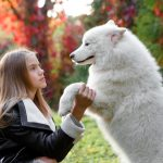 Expert Dog Training Is For Both You And Your Pet