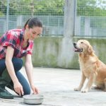 What Can You Expect From a Dog Boarding Service?